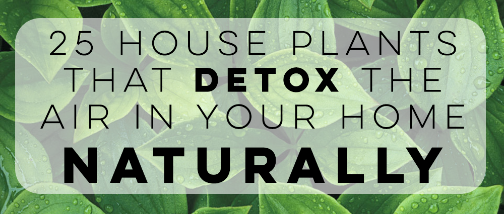 25 House Plants That Detox the Air in Your Home Naturally