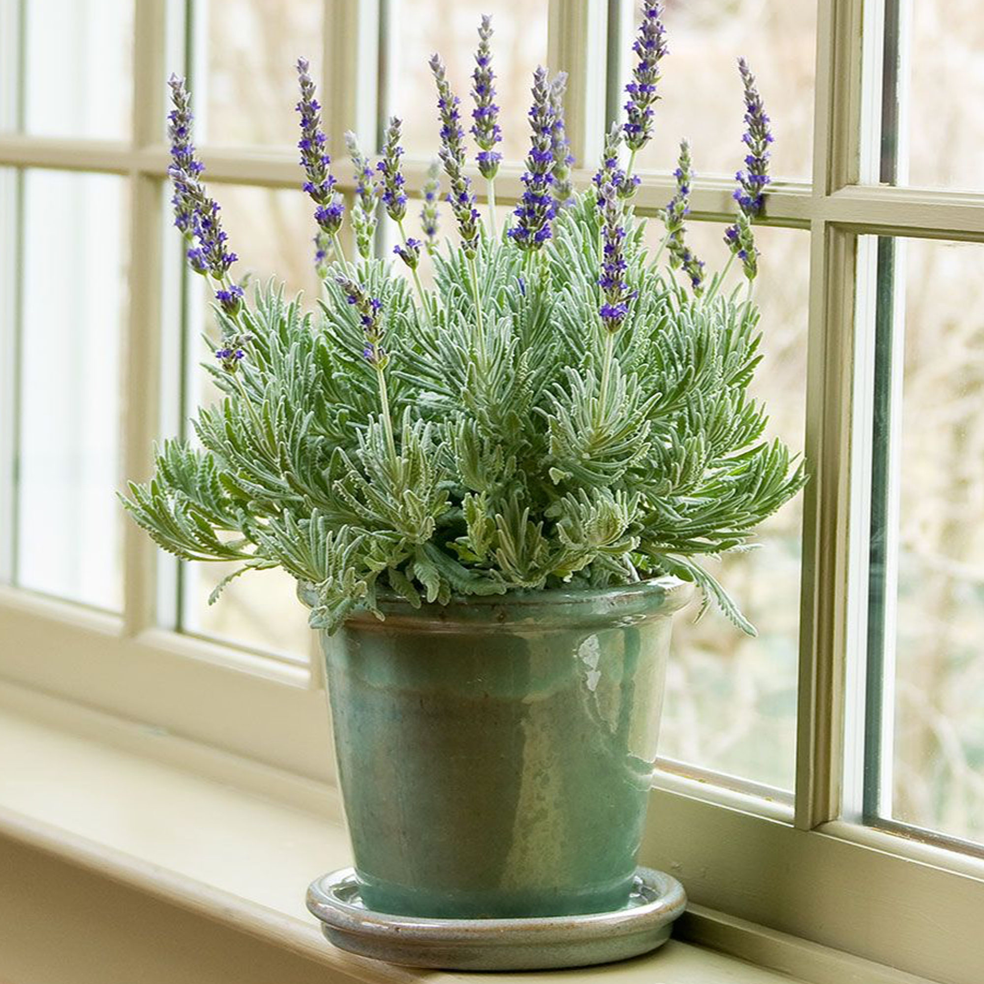 25 House Plants That Detox Your Home Naturally Schneider
